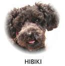 hibiki21